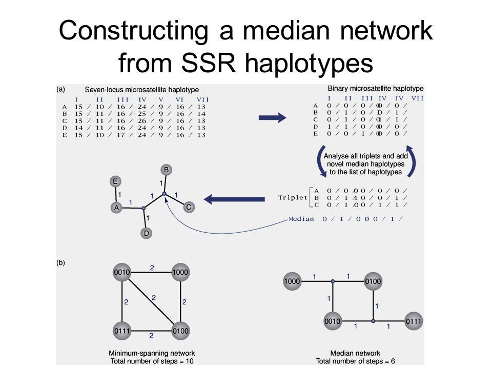 Constructing a median network from SSR haplotypes