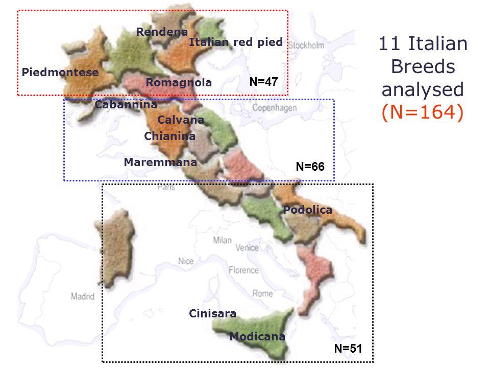 Breeds analysed 11 Italian Breeds analysed (N=164) Modicana Cinisara Podolica Maremmana Chianina Calvana Romagnola Piedmontese Rendena Italian red pie