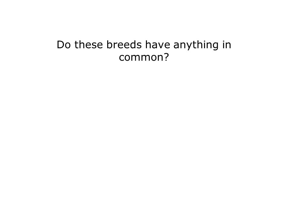 Do these breeds have anything in common?