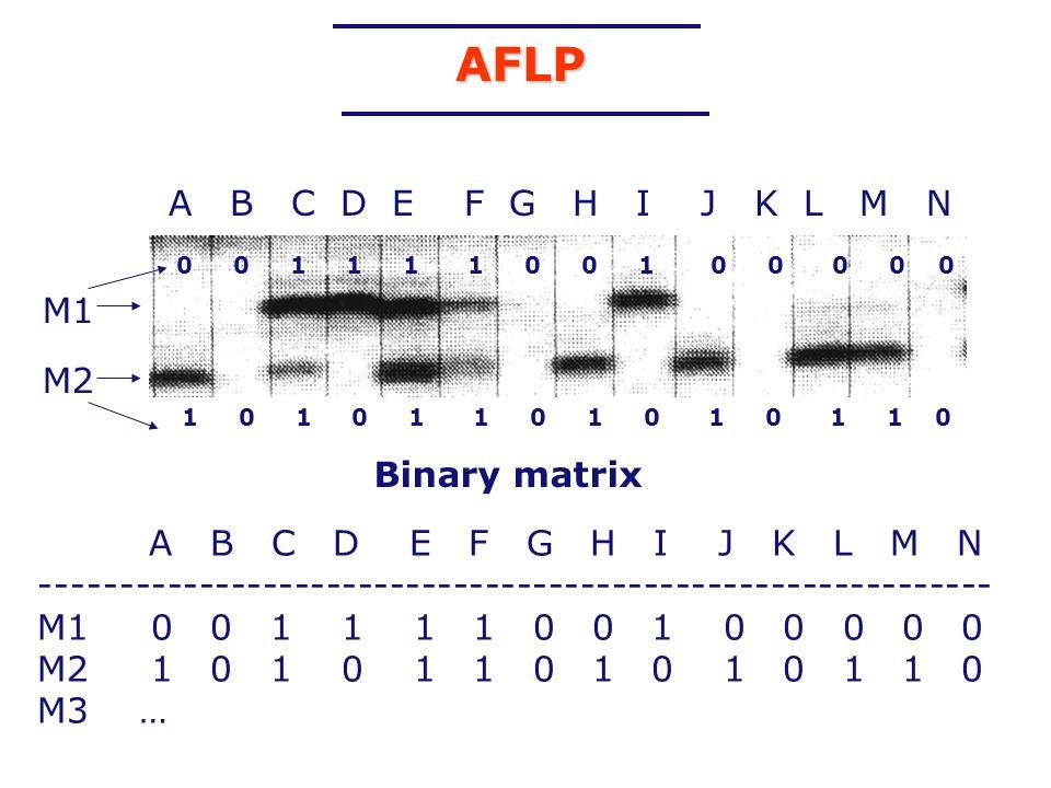 AFLP M1 0 0 1 1 1 1 0 0 1 0 0 0 0 0 M2 Binary matrix A B C D E F G H I J K L M N ------------------------------------------------------------ M1 0 0 1