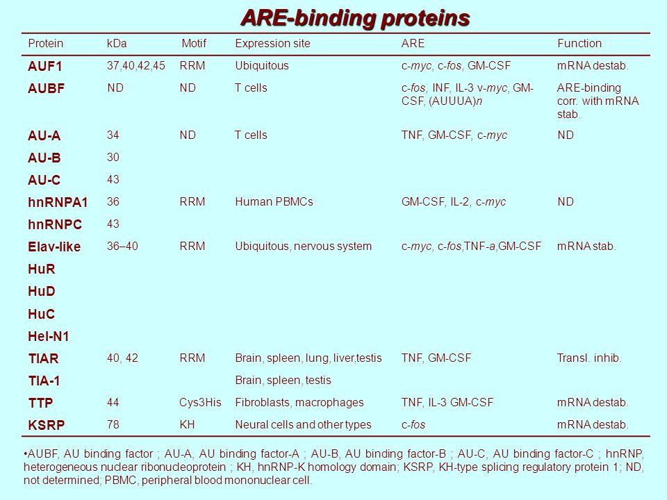 ARE-binding proteins ProteinkDa MotifExpression siteAREFunction AUF1 37,40,42,45RRMUbiquitousc-myc, c-fos, GM-CSFmRNA destab. AUBF ND T cellsc-fos, IN