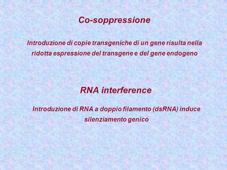 Co-soppressione Introduzione di copie transgeniche di un gene risulta nella ridotta espressione del transgene e del gene endogeno RNA interference Int
