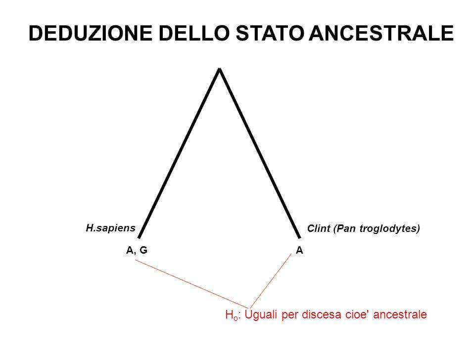 H.sapiens A, G A Clint (Pan troglodytes) DEDUZIONE DELLO STATO ANCESTRALE H o : Uguali per discesa cioe' ancestrale
