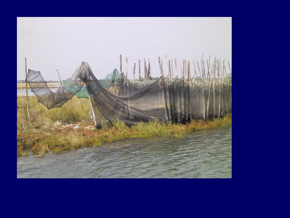 Today landscape: lagoon and fishermen nets
