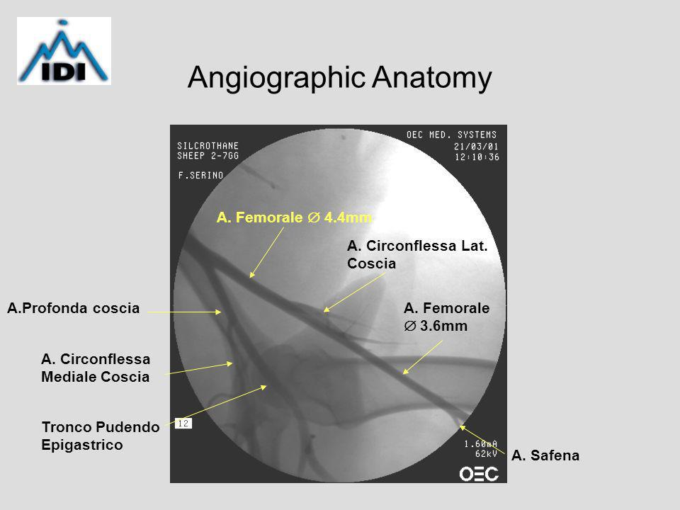 Angiographic Anatomy A. Femorale 4.4mm A. Femorale 3.6mm A.Profonda coscia A.