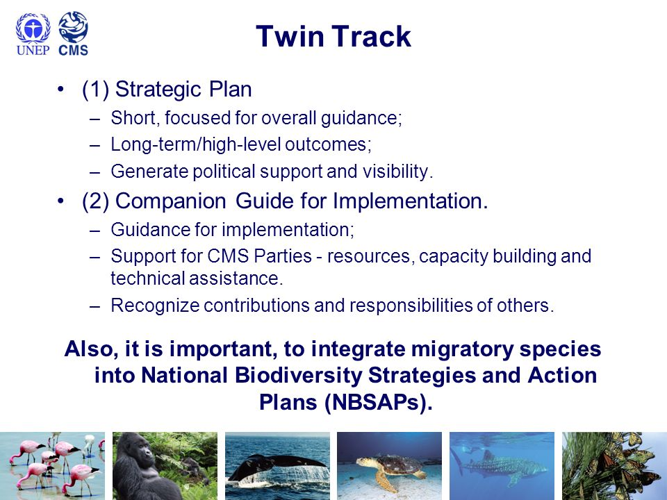 Twin Track (1) Strategic Plan –Short, focused for overall guidance; –Long-term/high-level outcomes; –Generate political support and visibility. (2) Co
