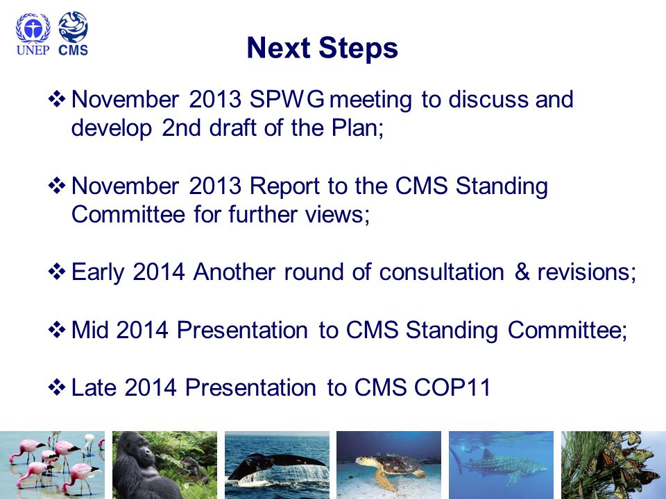 Next Steps November 2013 SPWG meeting to discuss and develop 2nd draft of the Plan; November 2013 Report to the CMS Standing Committee for further vie