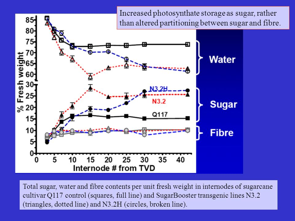 Total sugar, water and fibre contents per unit fresh weight in internodes of sugarcane cultivar Q117 control (squares, full line) and SugarBooster tra