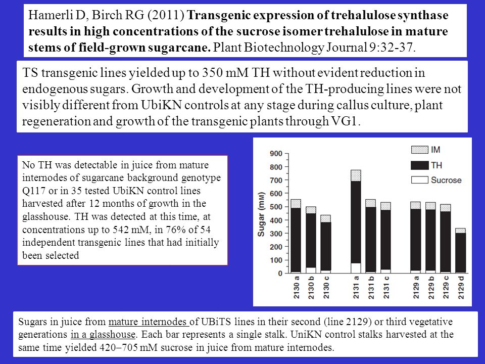 Hamerli D, Birch RG (2011) Transgenic expression of trehalulose synthase results in high concentrations of the sucrose isomer trehalulose in mature st
