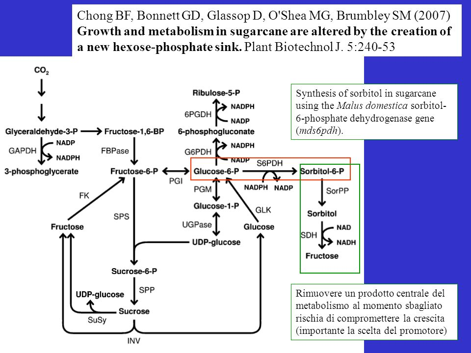 Chong BF, Bonnett GD, Glassop D, O'Shea MG, Brumbley SM (2007) Growth and metabolism in sugarcane are altered by the creation of a new hexose-phosphat