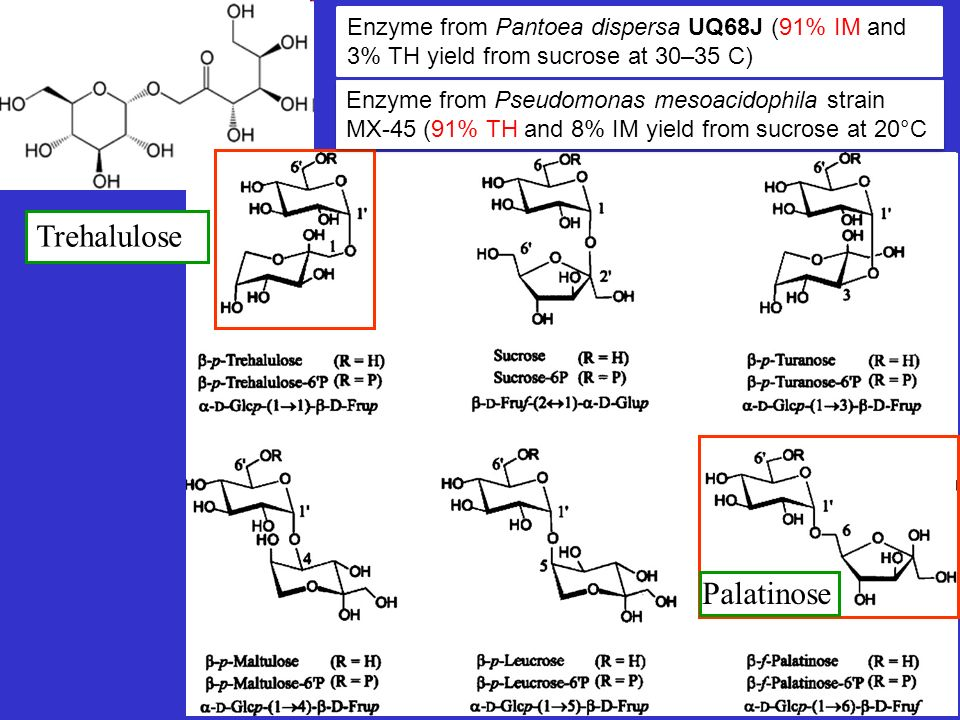 Trehalulose Enzyme from Pantoea dispersa UQ68J (91% IM and 3% TH yield from sucrose at 30–35 C) Enzyme from Pseudomonas mesoacidophila strain MX-45 (9