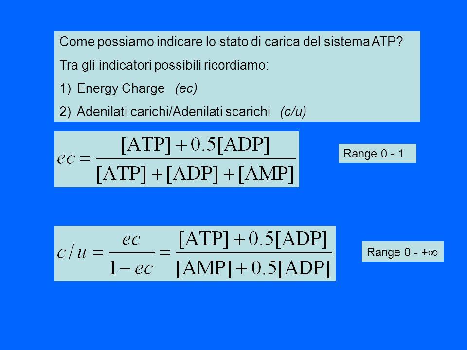 Come possiamo indicare lo stato di carica del sistema ATP? Tra gli indicatori possibili ricordiamo: 1)Energy Charge (ec) 2)Adenilati carichi/Adenilati