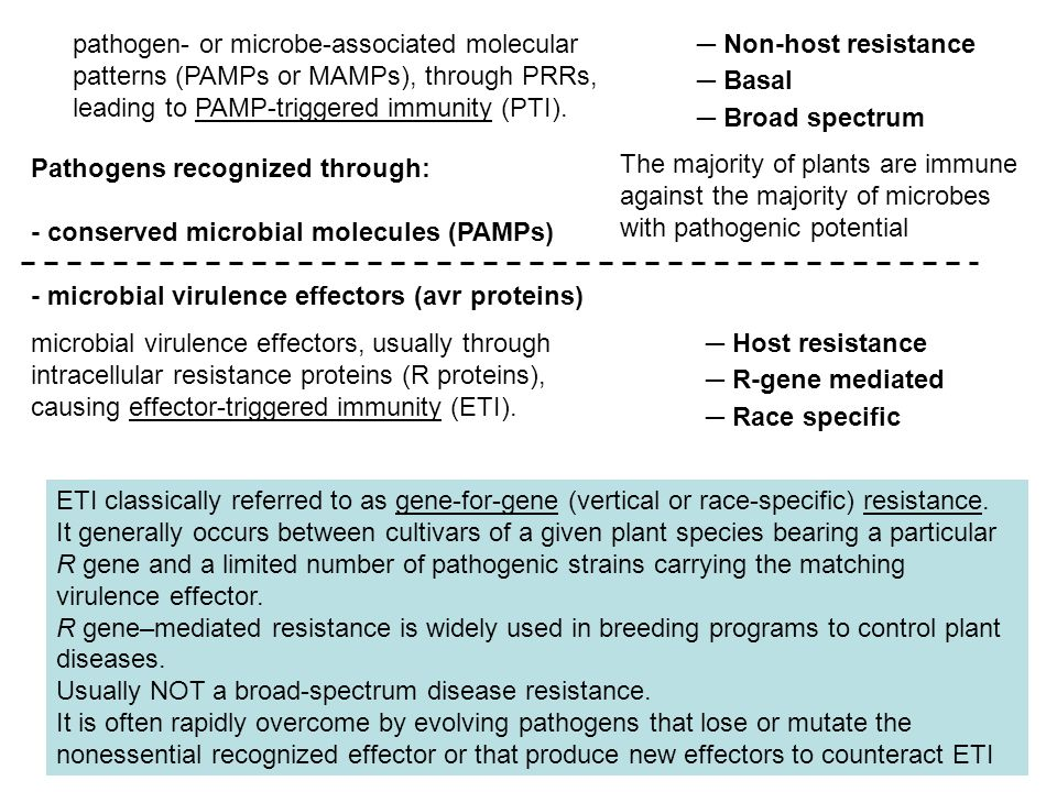 Pathogens recognized through: - conserved microbial molecules (PAMPs) - microbial virulence effectors (avr proteins) pathogen- or microbe-associated m