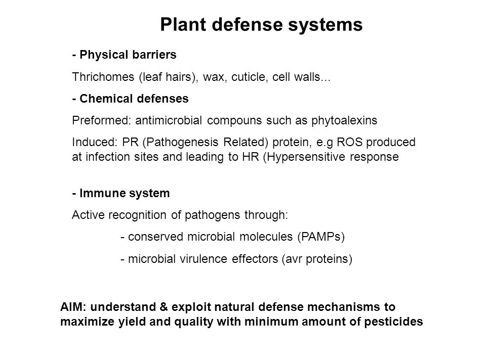 Plant defense systems - Physical barriers Thrichomes (leaf hairs), wax, cuticle, cell walls... - Chemical defenses Preformed: antimicrobial compouns s