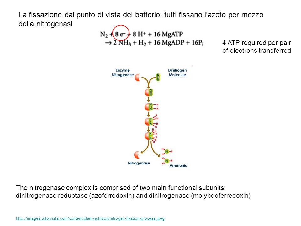 Nitrogenase Fe protein cycle Fe and MoFe proteins of A.