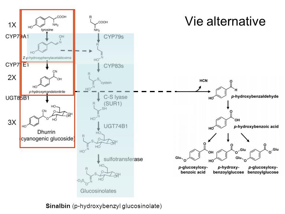 Vie alternative 1X 2X 3X Sinalbin (p-hydroxybenzyl glucosinolate)