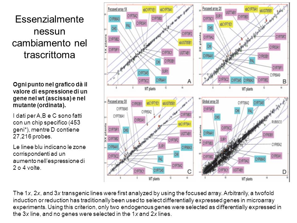Essenzialmente nessun cambiamento nel trascrittoma The 1x, 2x, and 3x transgenic lines were first analyzed by using the focused array.