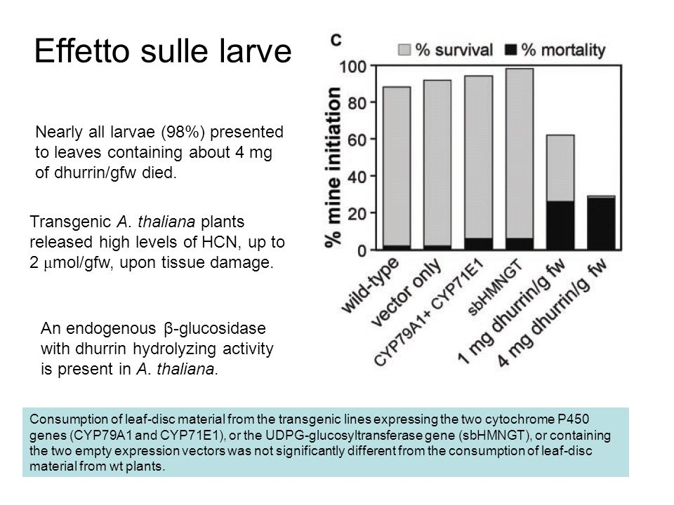 Effetto sulle larve Nearly all larvae (98%) presented to leaves containing about 4 mg of dhurrin/gfw died.