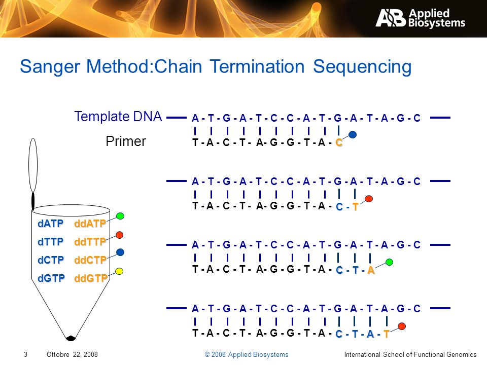 3 Ottobre 22, 2008 © 2008 Applied BiosystemsInternational School of Functional Genomics Sanger Method:Chain Termination Sequencing dATPdTTPdCTPdGTPddA