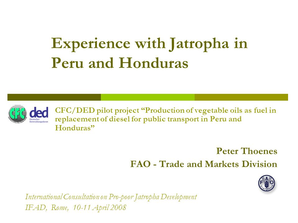 Experience with Jatropha in Peru and Honduras CFC/DED pilot project Production of vegetable oils as fuel in replacement of diesel for public transport