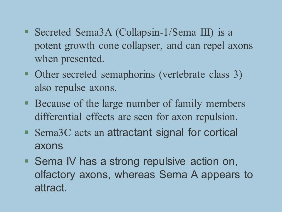 §Secreted Sema3A (Collapsin-1/Sema III) is a potent growth cone collapser, and can repel axons when presented. §Other secreted semaphorins (vertebrate