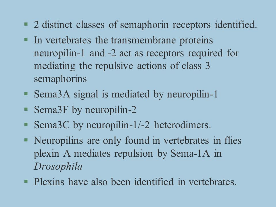 §2 distinct classes of semaphorin receptors identified. §In vertebrates the transmembrane proteins neuropilin-1 and -2 act as receptors required for m