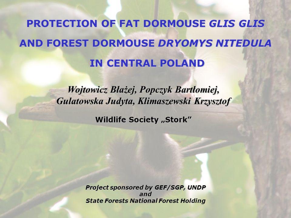 PROTECTION OF FAT DORMOUSE GLIS GLIS AND FOREST DORMOUSE DRYOMYS NITEDULA IN CENTRAL POLAND IN CENTRAL POLAND Wojtowicz Błażej, Popczyk Bartłomiej, Gu