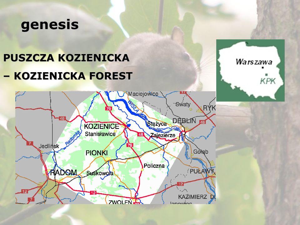 PUSZCZA KOZIENICKA – KOZIENICKA FOREST Bones of Glis glis in tawny owl (Strix aluco) pellets: 1992 - 7 specimens 2000 – 9 specimens genesis