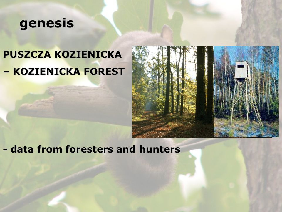 PUSZCZA KOZIENICKA – KOZIENICKA FOREST - data from foresters and hunters genesis