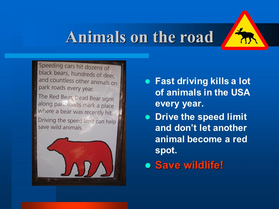 Animals on the road Fast driving kills a lot of animals in the USA every year. Drive the speed limit and dont let another animal become a red spot. Sa