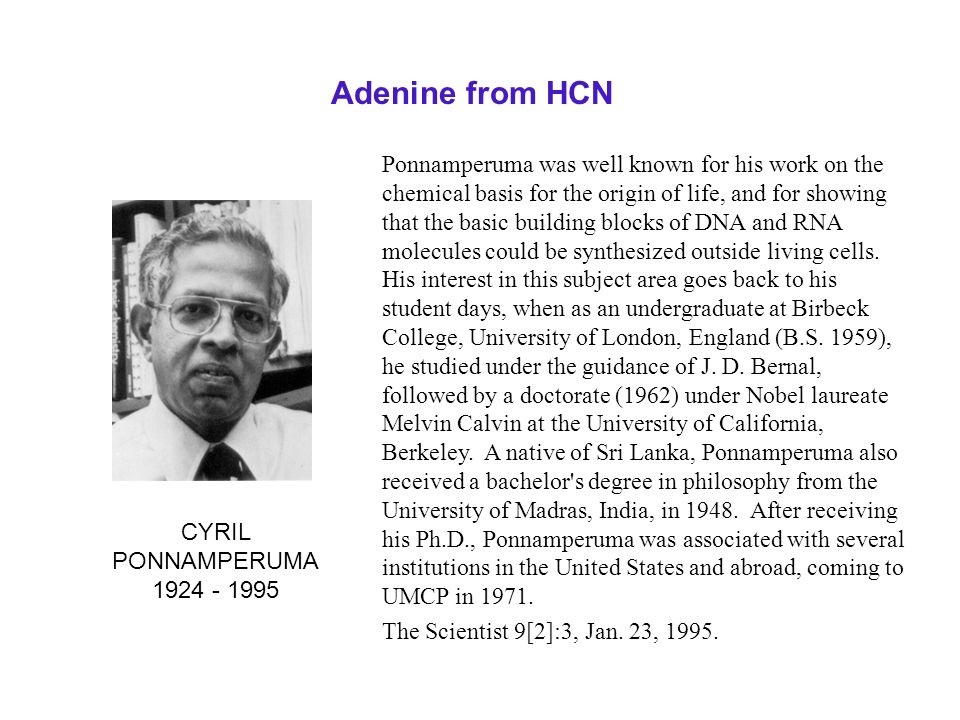 Adenine from HCN Ponnamperuma was well known for his work on the chemical basis for the origin of life, and for showing that the basic building blocks
