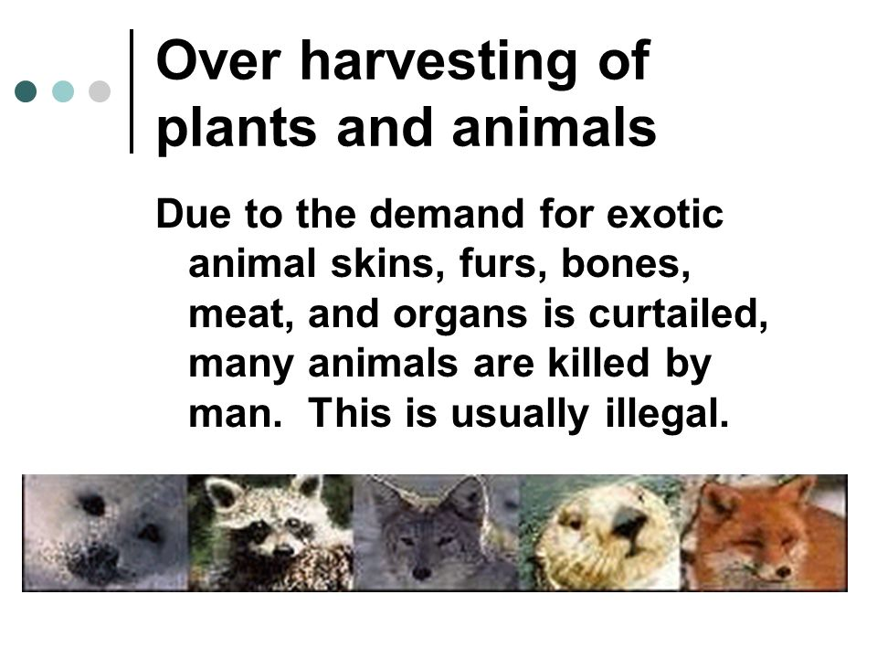 Over harvesting of plants and animals Due to the demand for exotic animal skins, furs, bones, meat, and organs is curtailed, many animals are killed b