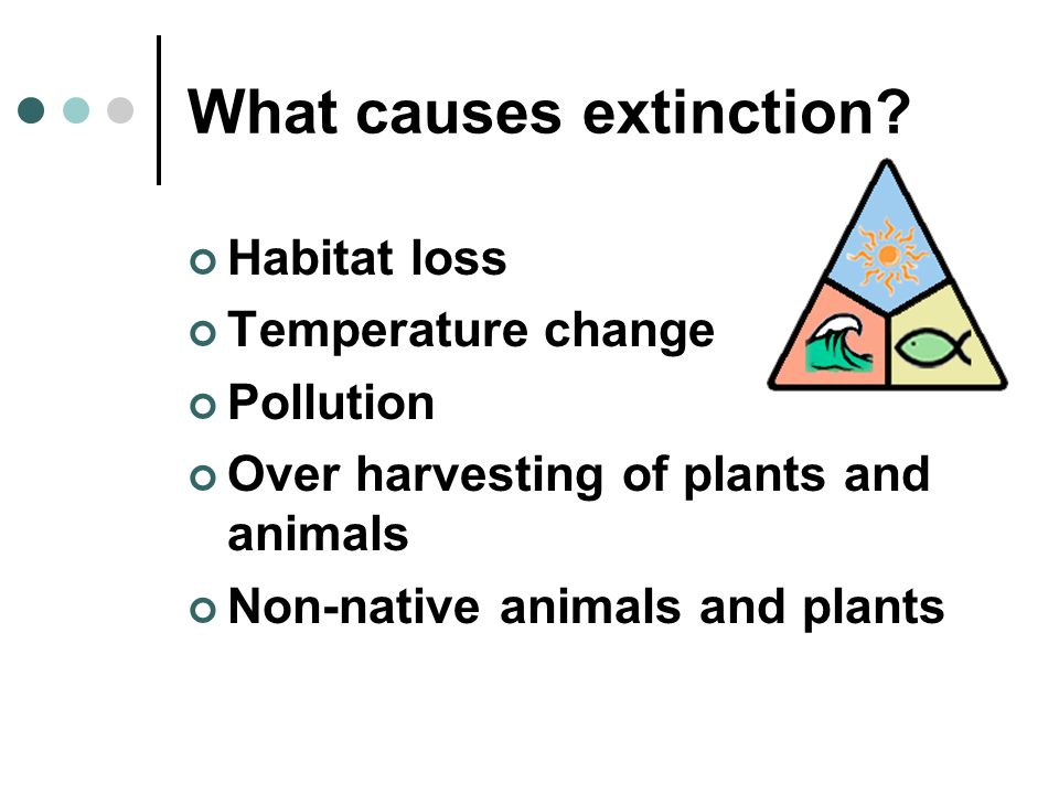 What causes extinction? Habitat loss Temperature change Pollution Over harvesting of plants and animals Non-native animals and plants