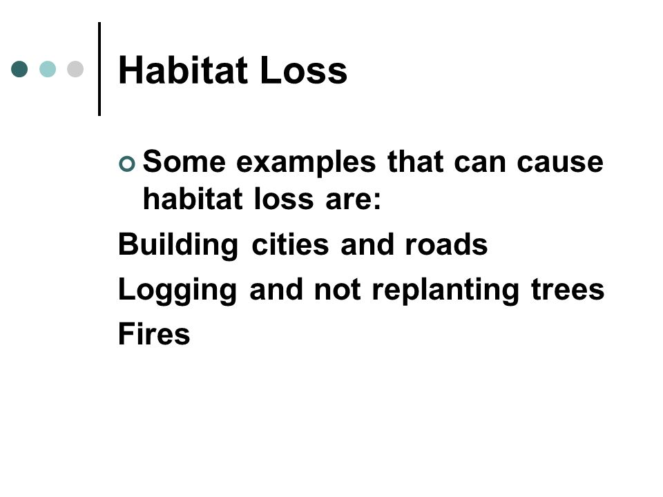 Habitat Loss Some examples that can cause habitat loss are: Building cities and roads Logging and not replanting trees Fires