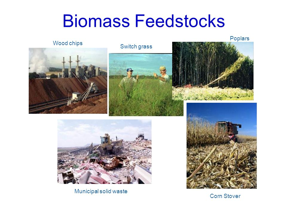 Wood chips Switch grass Poplars Municipal solid waste Corn Stover Biomass Feedstocks