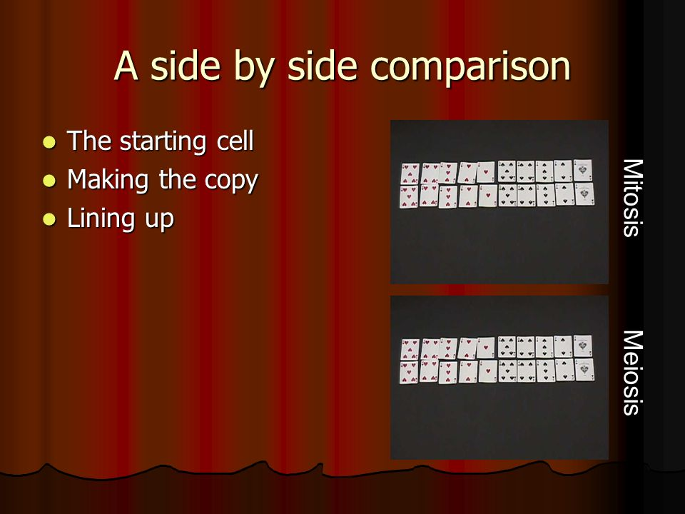 A side by side comparison The starting cell The starting cell Making the copy Making the copy Lining up Lining up Mitosis Meiosis