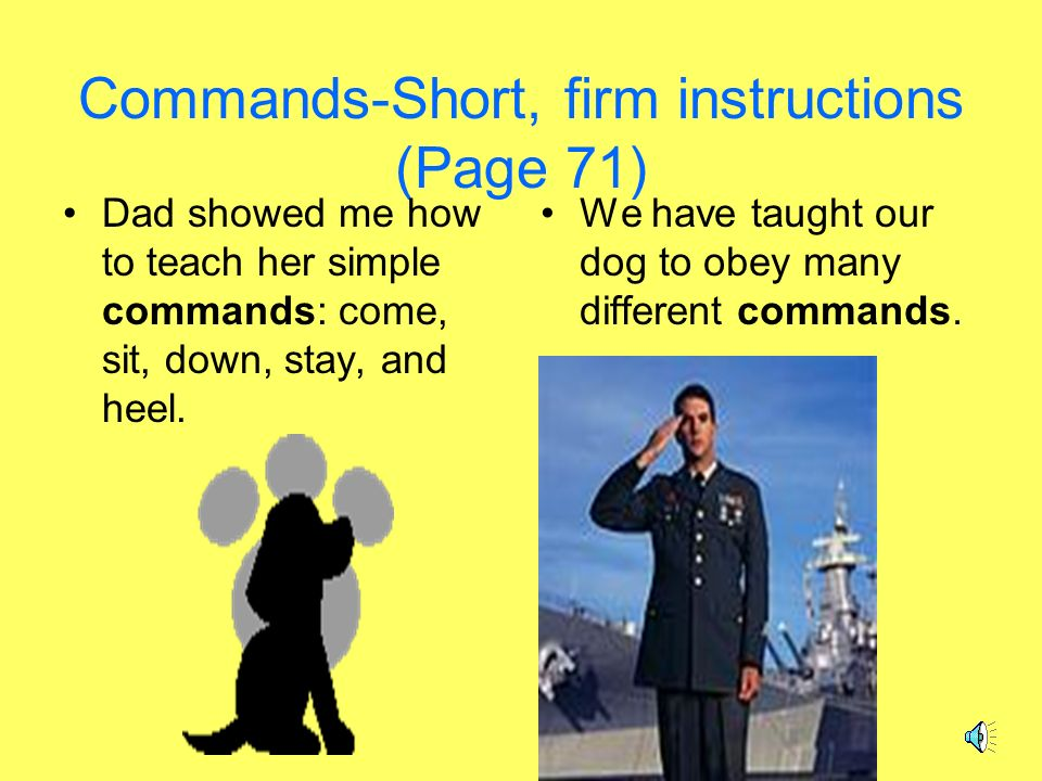 Rugby &Rosie Commands Manners Proud TrainersGraduation