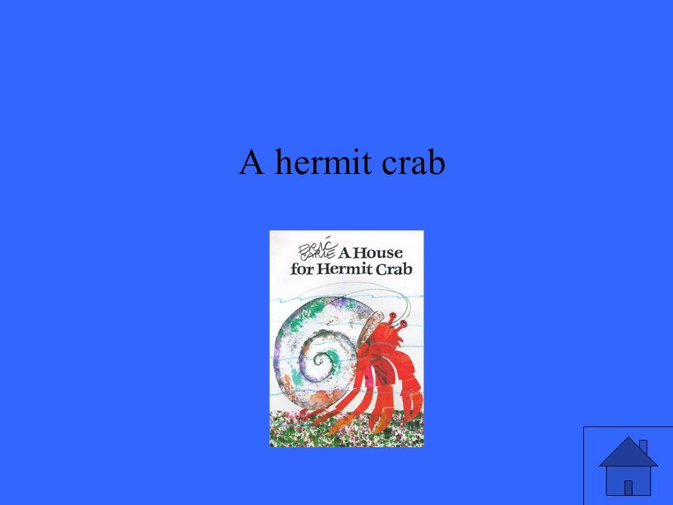 A hermit crab