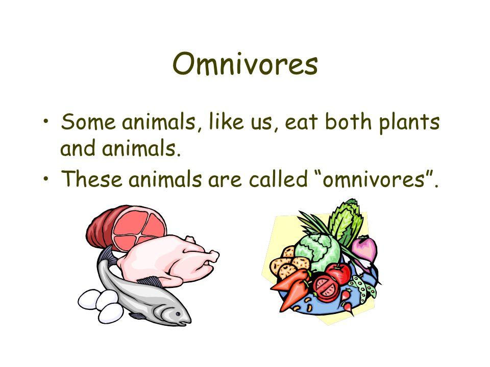Omnivores Some animals, like us, eat both plants and animals. These animals are called omnivores.