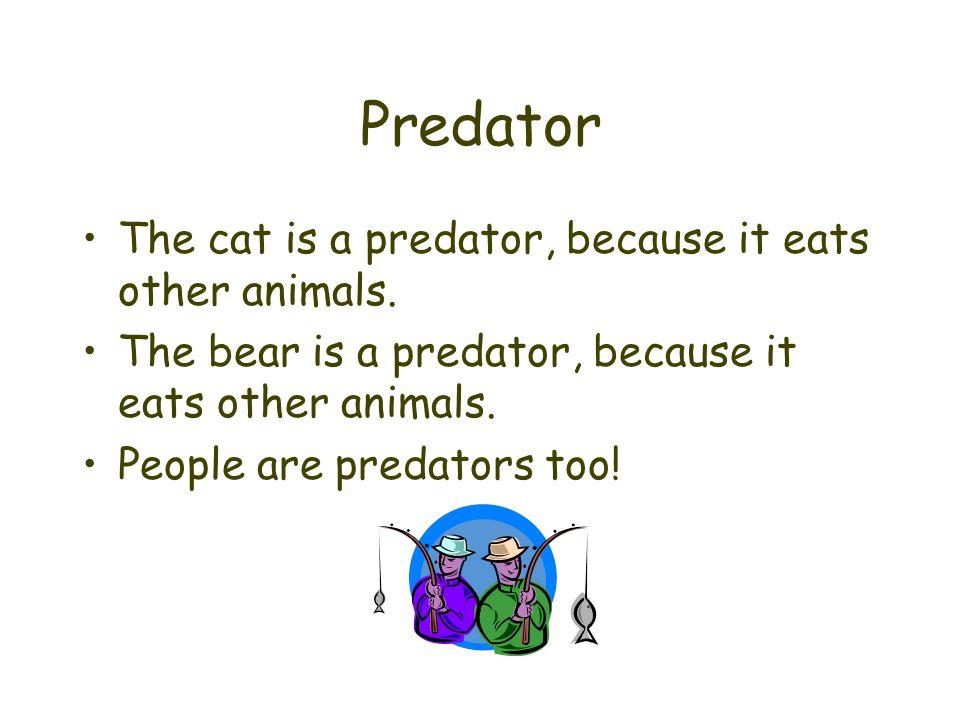 Predator The cat is a predator, because it eats other animals. The bear is a predator, because it eats other animals. People are predators too!