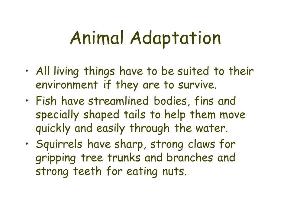 Animal Adaptation All living things have to be suited to their environment if they are to survive. Fish have streamlined bodies, fins and specially sh
