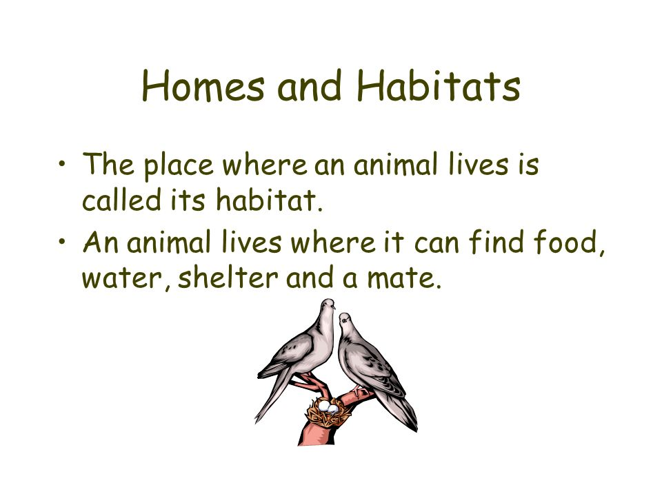 Homes and Habitats The place where an animal lives is called its habitat. An animal lives where it can find food, water, shelter and a mate.