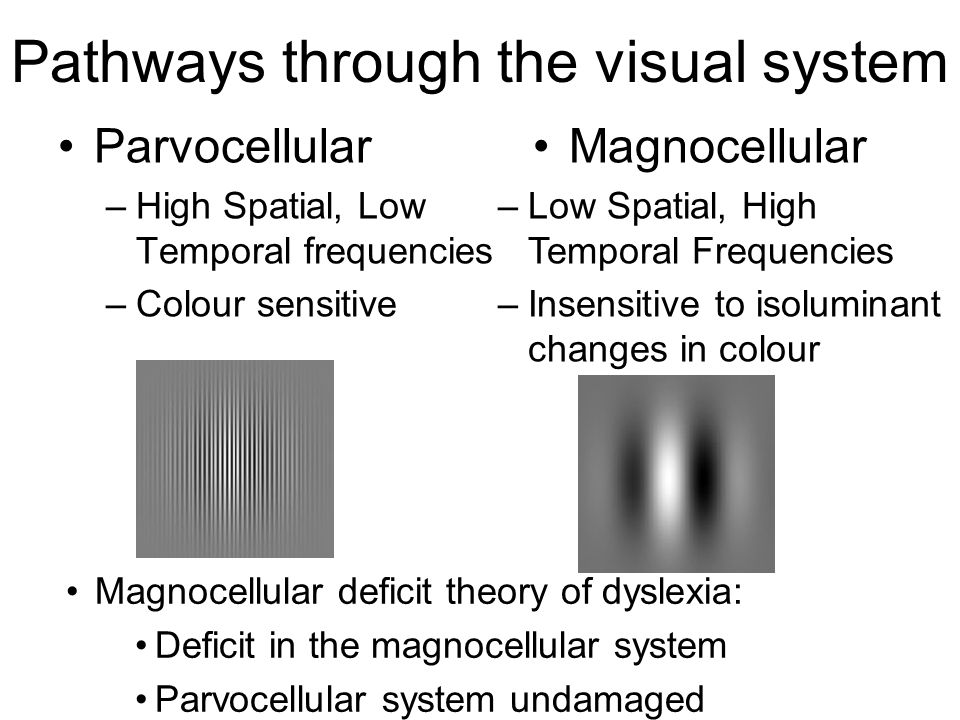 Pathways through the visual system Parvocellular –High Spatial, Low Temporal frequencies –Colour sensitive Magnocellular –Low Spatial, High Temporal F