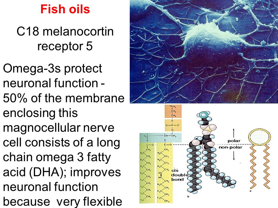 Fish oils C18 melanocortin receptor 5 Omega-3s protect neuronal function - 50% of the membrane enclosing this magnocellular nerve cell consists of a l