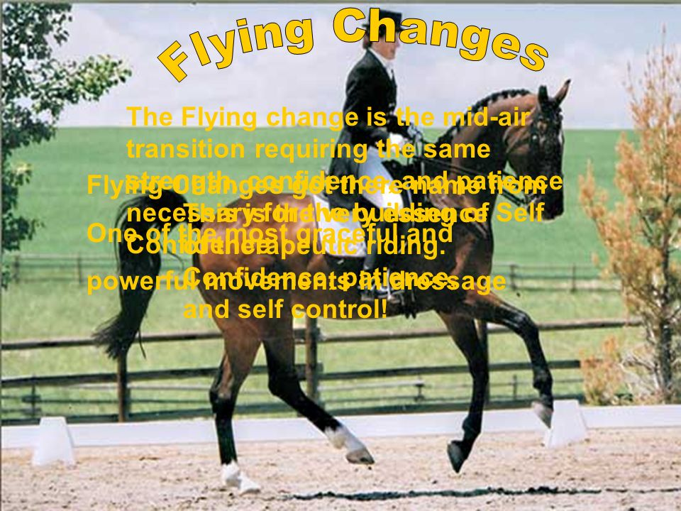 Flying Changes got there name from One of the most graceful and powerful movements in dressage The Flying change is the mid-air transition requiring t