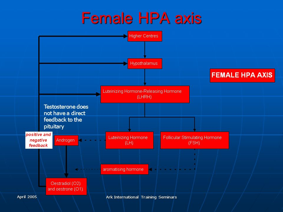 April 2005 Ark International Training Seminars Female HPA axis Testosterone does not have a direct feedback to the pituitary