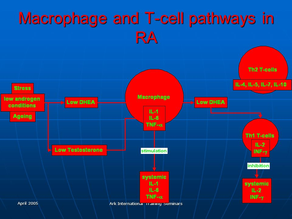 April 2005 Ark International Training Seminars Macrophage and T-cell pathways in RA