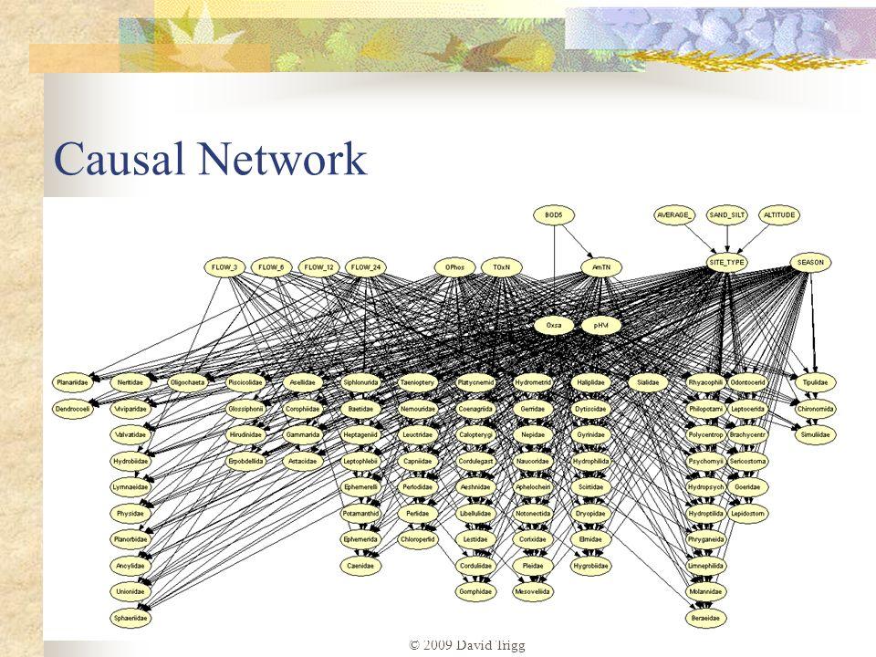 © 2009 David Trigg Causal Network