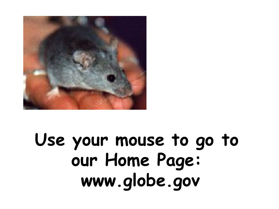 Use your mouse to go to our Home Page: www.globe.gov