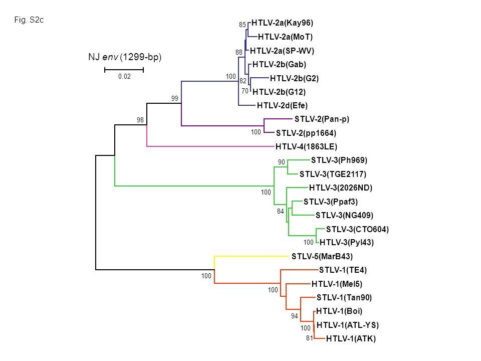 HTLV-1(ATK) HTLV-1(Boi) HTLV-1(ATL-YS) HTLV-1(Mel5) STLV-5(MarB43) STLV-1(Tan90) STLV-1(TE4) HTLV-3(Pyl43) HTLV-3(2026ND) STLV-3(NG409) STLV-3(Ph969)